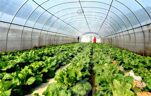 Vegetable planting temperature and humidity control technology